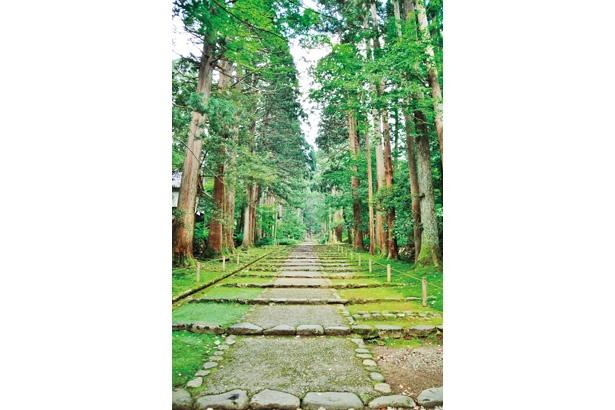 スギ並木が約1㎞続く、平泉寺旧参道。500年ほど前の石畳道も残る