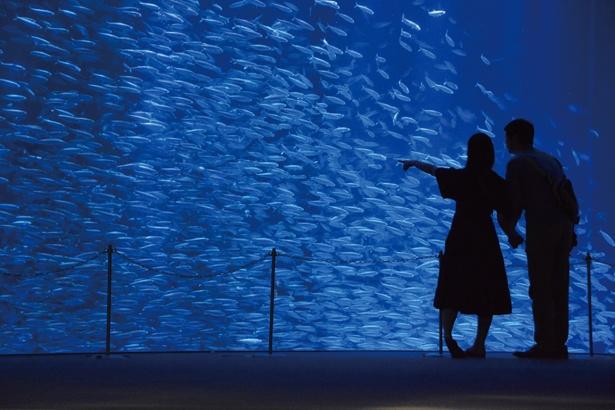 名古屋港水族館「サマーナイトアクアリウム」