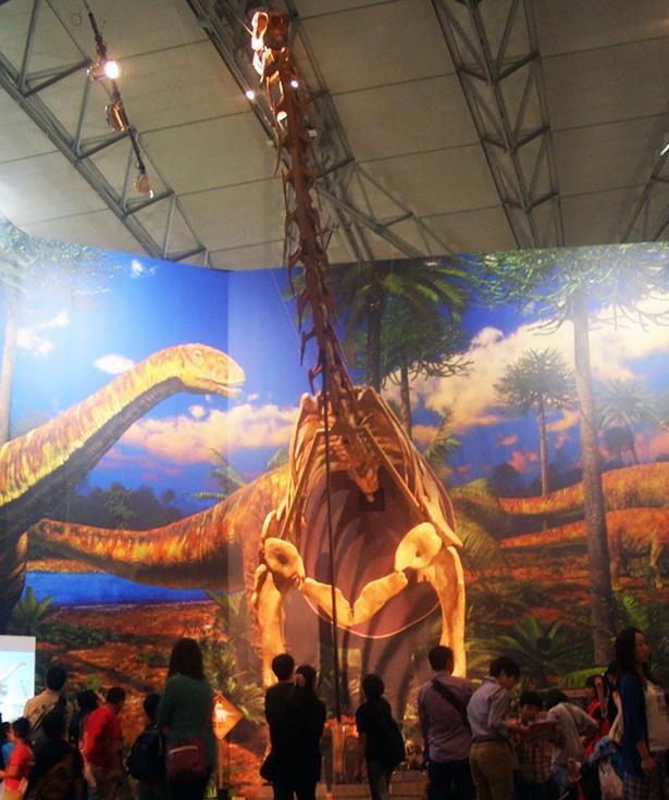 【写真を見る】九州初公開となるヨーロッパ最大の竜脚類「トゥリアサウルス」の半身復元骨格