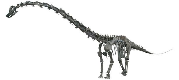 ディプロドクスの全身復元骨格