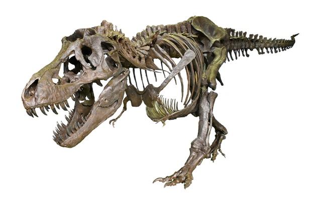 ティラノサウルスの全身復元骨格