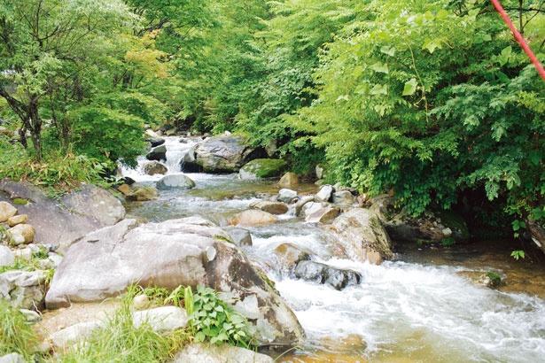 滝の周辺は深い緑におおわれて、陽射しも柔らか/三室渓谷