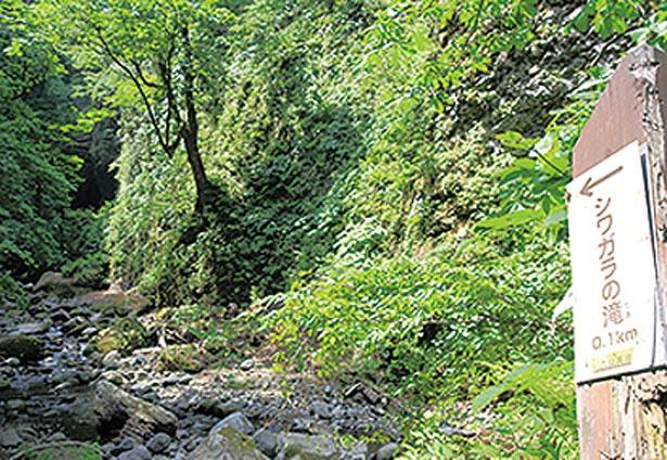 ルートの最後は約100mの沢登り/シワガラの滝