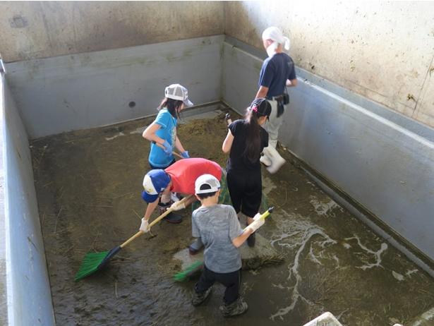 旭山動物園/かば館のプール掃除体験(2017年サマースクールより)