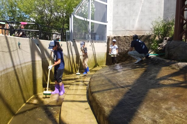 旭山動物園/カピバラのプール掃除体験(2017年サマースクールより)