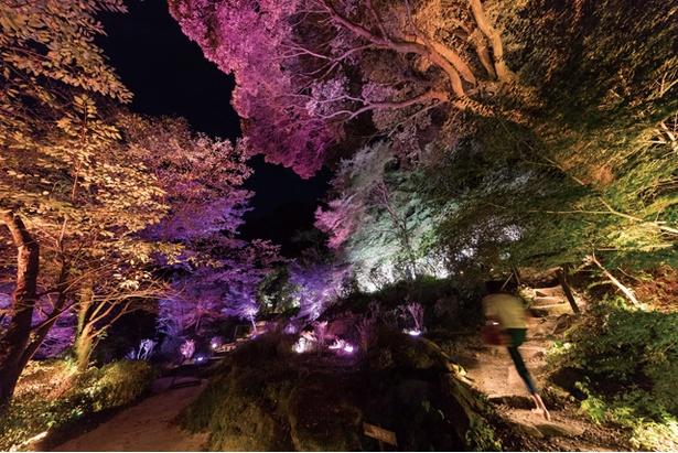 御船山楽園 /「夏桜と夏もみじの呼応する森」。木々の光は、鑑賞者が近くを通ると、色を変化させつつ、色特有の音色を響かせる。その光は放射状に、近隣の木々に伝播していく