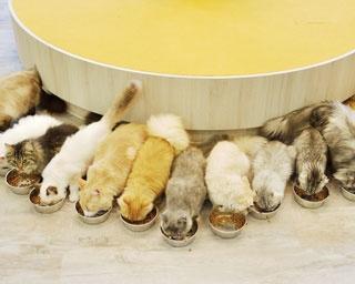 みんなで整列して食べる姿は必見/猫カフェMOCHA 京都河原町店
