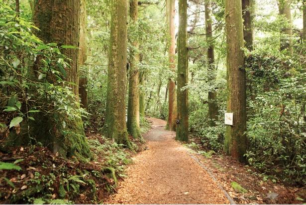 菊池渓谷 / 癒しコースは往復1km(30分)