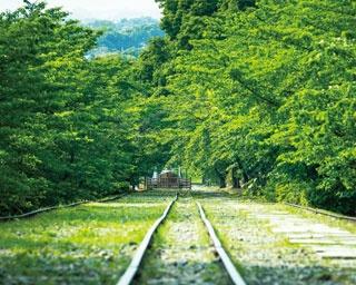 緑の葉を付けたソメイヨシノやヤマザクラなどが、両サイドから線路をおおう/蹴上インクライン