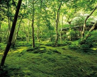 嵯峨野から亀岡まで、保津川渓谷沿いの7.3kmを平均時速約25kmでガタゴト走る/嵯峨野観光鉄道 トロッコ保津峡駅