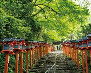本宮へと続く石段は天然のサンシェードにおおわれた快適な参道/貴船神社