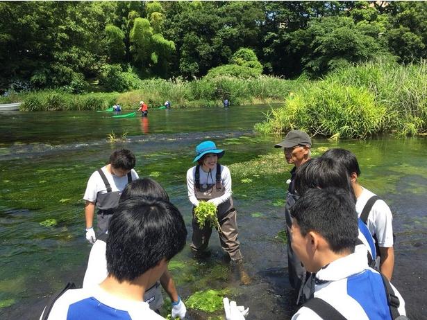【写真を見る】静岡県・清水町の柿田川を訪れる若村麻由美
