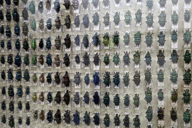 色とりどりの昆虫を集めた標本。まるで宝石を見ているような美しさ
