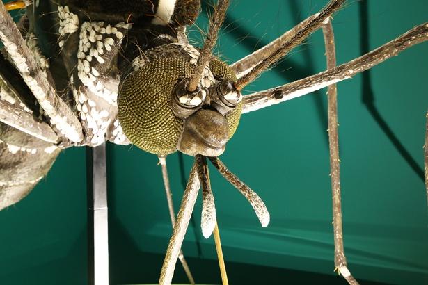 刺されるとかゆいヒトスジシマカも巨大模型で登場。こんな大きさの蚊に刺されたらひとたまりもないだろう