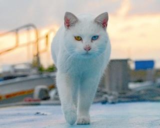 """【写真特集】インスタで話題!熊本・天草の""""猫島""""で、気ままに暮らすネコたち"""