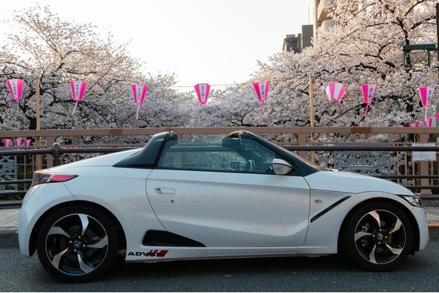 【写真を見る】満開の桜咲く目黒川とS660。道幅が狭い目黒川流域もS660ならスムースに走ることができる