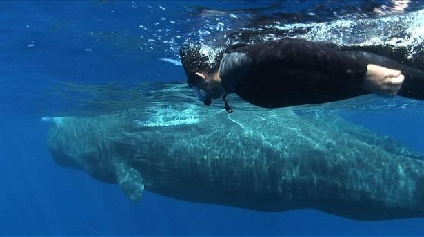 的場浩司とマッコウクジラの2ショット!