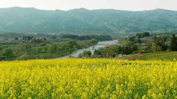 美しい長野県の菜の花畑とともに「おぼろ月夜」の風景を楽しむ