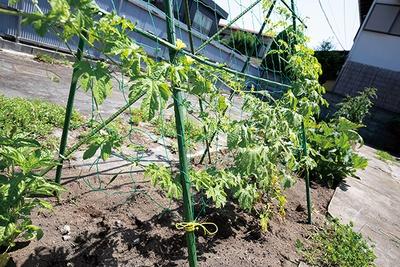 店の横にある一角でミニ菜園をしており、そこで採れた野菜も使っている