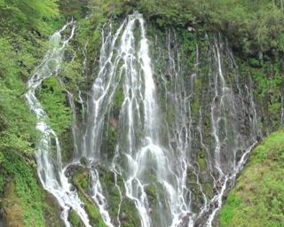 緑の中で見る迫力満点の滝にうっとり