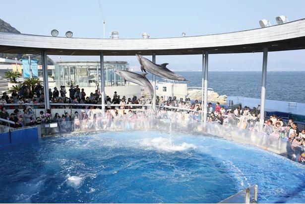 大分マリーンパレス水族館「うみたまご」 / 大人気のイルカのパフォーマンス。プールと客席の距離が近く大迫力だ