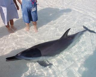 イルカと水遊び、地元グルメや無料足湯も!大分・別府の日帰りおすすめスポット4選