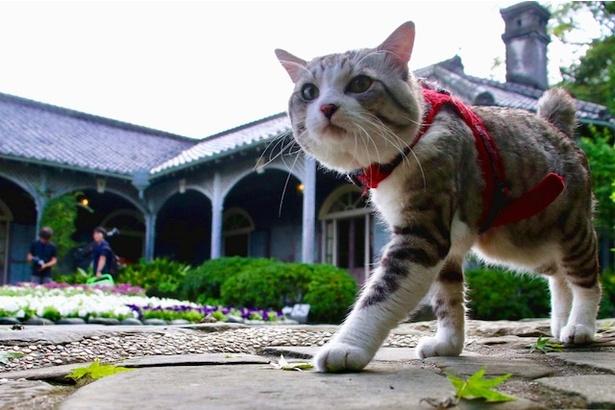 """日本中を旅する鹿児島育ちの""""旅猫 ニャン吉"""""""