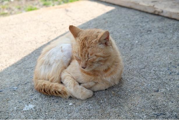 """""""猫島""""からお届け!癒しの島ネコギャラリー"""