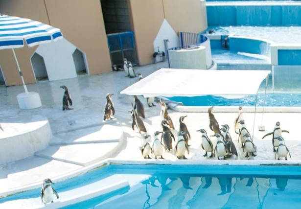 入館すると最初に登場。ペンギンのかわいい姿を間近で見られる