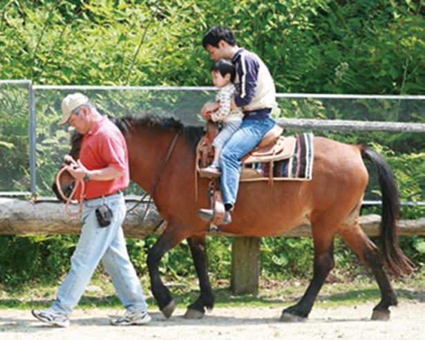 ひき馬体験
