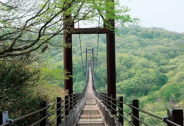 園内の中央にあるつり橋の星のブランコはハイキングの最大のお楽しみ/ほしだ園地