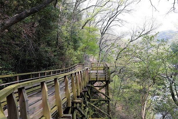 緑のトンネルを抜ける歩道橋/ほしだ園地