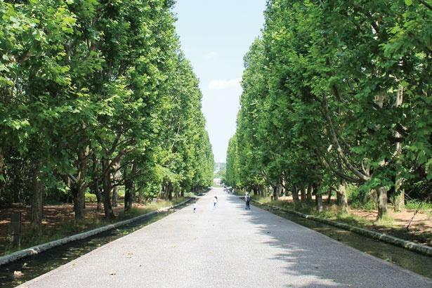 西口とせせらぎ広場を結ぶ西大路/万博記念公園