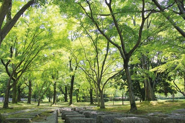 【写真をみる】どんぐり池から流れるせせらぎなど、園内は涼しげなスポットも満載/万博記念公園