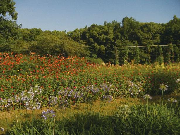 8つの各庭では宿根草をメインに一年草、中低木の約40種の花や草木を栽培している/万博記念公園