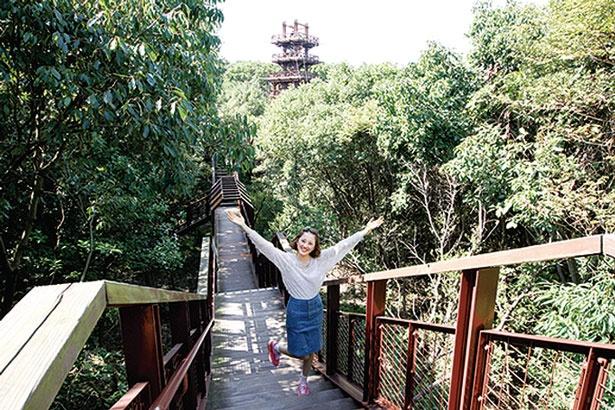 揺れる網の歩廊を抜けると展望タワーへ/万博記念公園