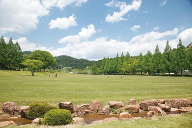 自然豊かで、のんびりとした時間が過ごせる芝生広場
