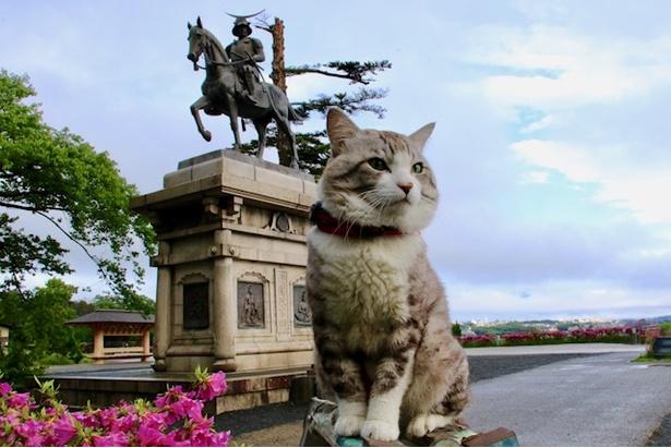 仙台にて、伊達政宗騎馬像とニャン吉