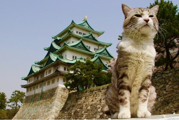 城とニャン吉、どっちがカッコイイ?