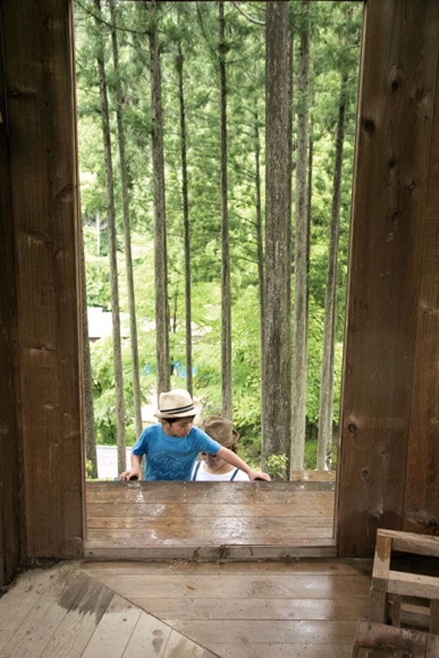 足元に気を付けながら、冒険気分で登ってみよう/花背リゾート 山村都市交流の森