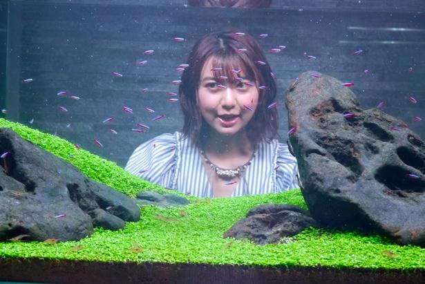 すみだ水族館で映画「未来のミライ」企画展スタート。オープニングイベントには上白石萌歌も出席!