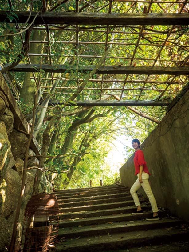 徐々に緑が深くなるが、階段や遊歩道が整備されていて歩きやすい/茂庵