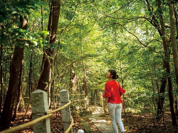 うっそうと茂る森の中を歩くと、鳥のさえずりや風の音がさわやか/茂庵