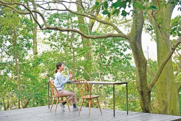 テラスは地面より高い位置に造られていて、目の前に緑の葉が生い茂る/マホロバ フォレスト