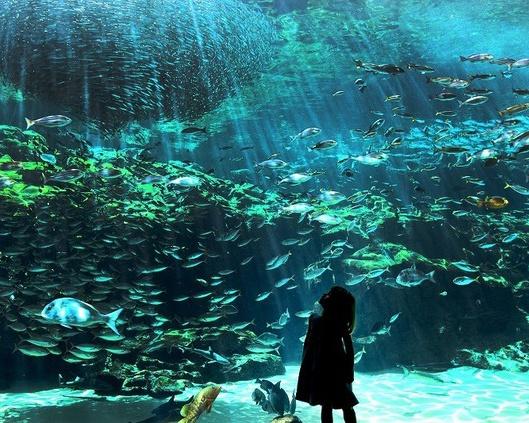 九十九島水族館海きらら / 九十九島湾大水槽は沖合いから沿岸までの自然環境と生きものを再現