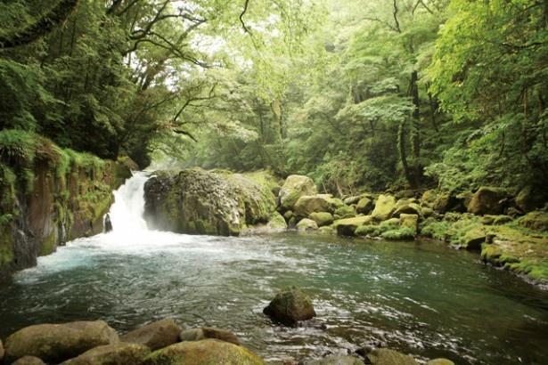 菊池渓谷 / 勢いよく水が流れる黎明の滝
