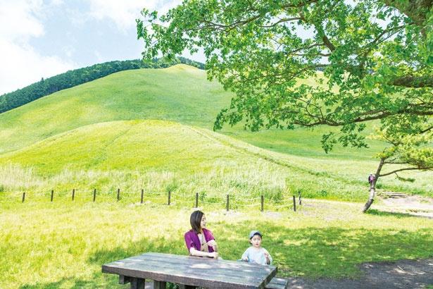 テーブルやベンチがいくつか設置/曽爾高原