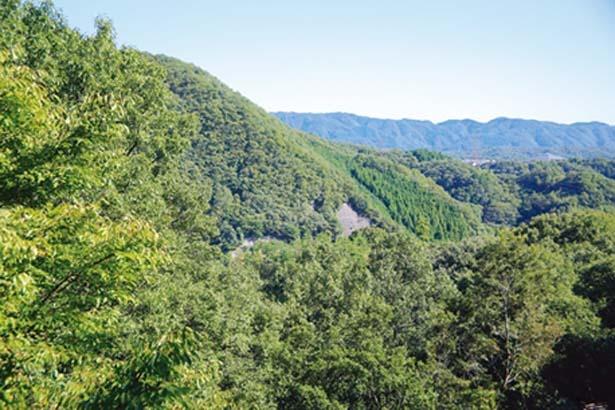 「自然観察の森」が見渡せるぞ/一庫公園 自然観察の森