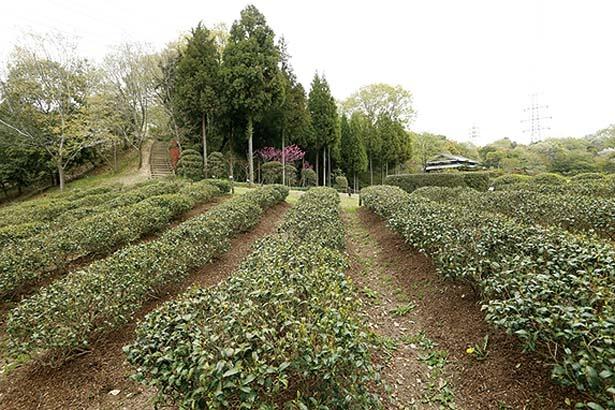 「河内の里」には農家風の休憩所を中心に、庭園や畑などのどかな風景が広がる/錦織公園