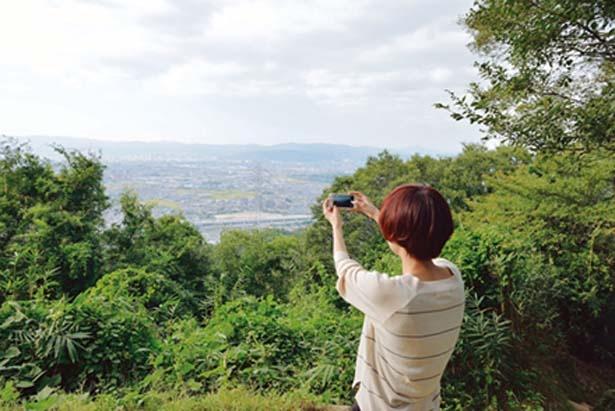 木と木の間から見える町並みの景色がグッド/交野いきもの ふれあいの里